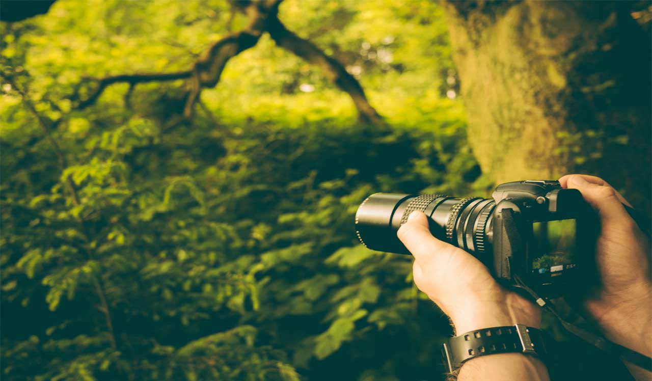 Careers in Wildlife Photography - What does a Wildlife Photographer Do?