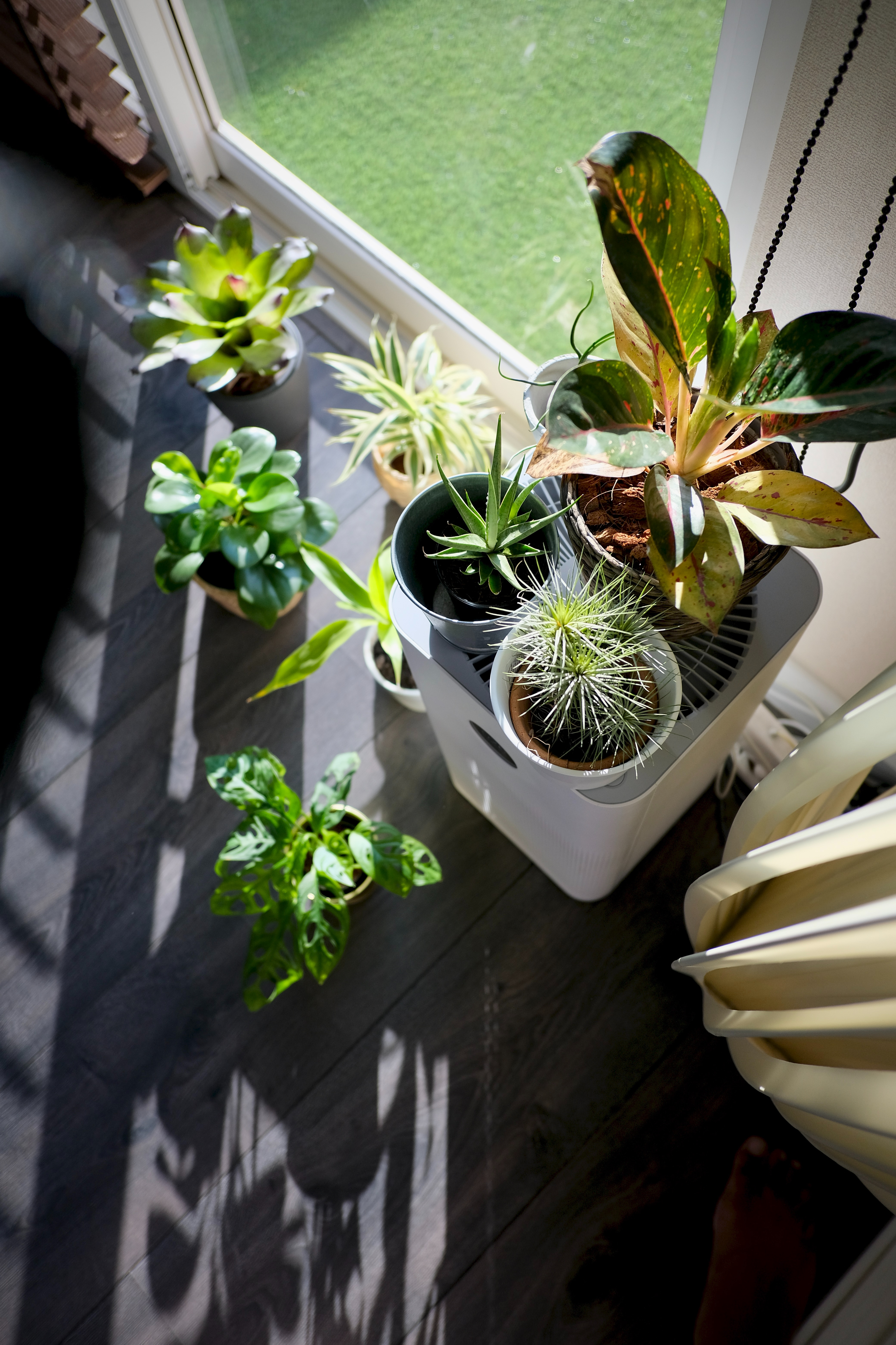 green potted plants for the home